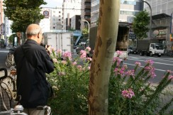 Man takes a picture of flowers along a busy street nearby Asakusa station, Tokyo